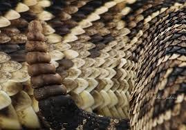 snake skin nature s folio