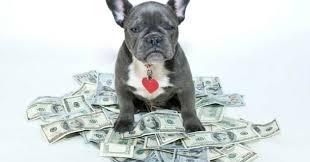 un chien combien ça coûte acheter chien wamiz