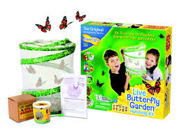Insect Lore Butterfly Garden Review & giveaway Growing Family