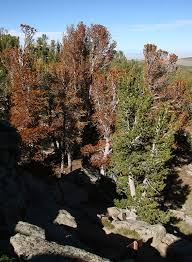 Sinks Canyon Wy Weather by Sinks Canyon State Park Nature Habitats Conifer Habitat
