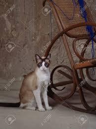 Cat Besides A Rocking Chair