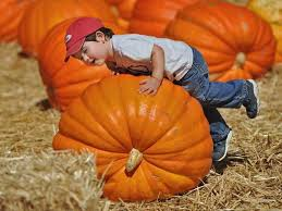 Pick Of The Patch Pumpkins Santa Clara by Halloween 2015 Events Bay Area Pumpkin Patches Haunted