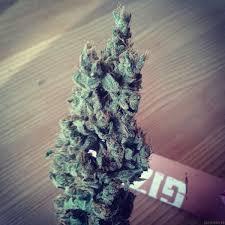 Happy Holiblaze Weed Pot Stoner Marijuana Weed Xmas Tree Etsy