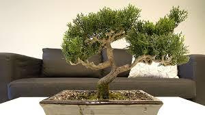 kunstbonsai kaufen die besten künstlichen bonsai angebote
