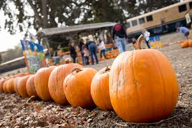Pumpkin Patch Sacramento by Pumpkin Train Sacramento Rivertrain