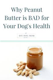 Turkey And Pumpkin For Dog Diarrhea by Why Peanut Butter Is Bad For Your Dog The Diy Dog Mom