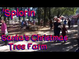 Eustis Christmas Tree Farm by Splorin Ep 21 Santa U0027s Christmas Tree Farm And Pumpkin Patch
