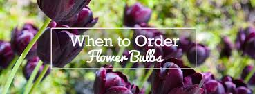 when to order flower bulbs