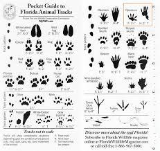 Florida Animal Tracks Identification