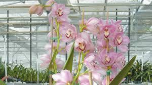 aux bureaux les plantes aux bureaux sont essentielles fleurs et jardins casa