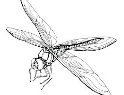 Dragonfly Coloring Pages Page Awesome On Free Co