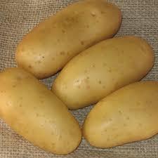 pomme de terre robe de chambre pommes de terre en robe des chs robe de chambre la recette