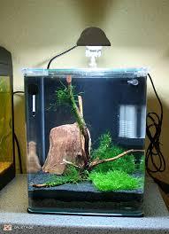 aquarium poisson prix prix petit aquarium poisson naturel