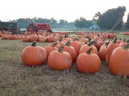 Atlanta Pumpkin Patch Corn Maze by Pumpkin Patch Warbington Farms