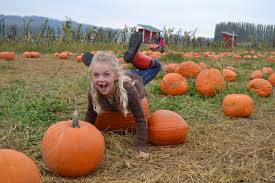 Swan Farms Snohomish Pumpkin Patch by Best Pumpkin Patches And Corn Mazes For Seattle And Eastside