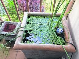 Aquascape Patio Pond 40 by Even A Small Patio Can Have A Fish Pond Life Southbendtribune Com