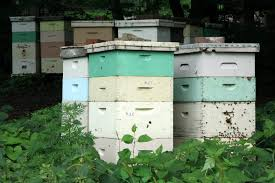 Planning And Purchasing Your Beehive - PerfectBee Hive Time Products A Bee Adventure For Everyone Bkeeping Everything You Need To Know Start Your First Best 25 Raising Bees Ideas On Pinterest Honey Bee Keeping The Bees In Your Backyard Guide North Americas Joseph Starting Housing And Feeding Top Bar Beehive Projects Events Level1techs Forums 562 Best Images Knees 320 Like Girl 10 Mistakes New Bkeepers Make Splitting Hives Increase Cookeville Bkeepers Nucleus Colony Or How A 8 Steps With Pictures