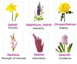 Flowers And Their Meanings Earths beauty marks
