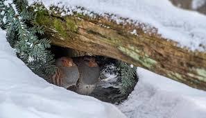 deutsche wildtier stiftung was machen mücken im winter