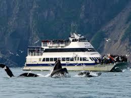 Kachemak Gear Shed Shipping by Business Listings Kenai Peninsula Tourism Marketing Council
