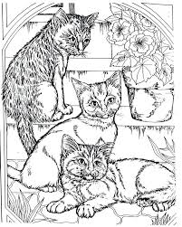 Full Image For Free Coloring Pages Adults Animals Colouring Cool