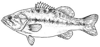 Bass Fish Texas Largemouth Colouring Page
