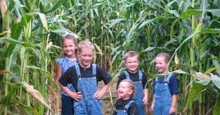 Basses Pumpkin Farm Groupon by Oakes Farm Corn Maze