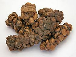 The Coffee Cherries Remain In Digestive Tract Of Luwaks For Around Twenty Fours Hours Mixed With Various Other Things Luwak Has Eaten