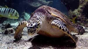 turtles aquarium la rochelle