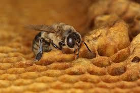 Colony Oklahoma Pumpkin Patch by Va Honey Bee Colonies Increasing Deaths Continue Wtop