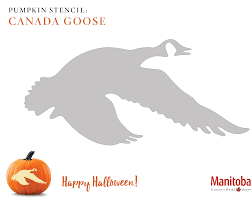 Elephant Pumpkin Carving Pattern by 6 Manitoba Pumpkin Carvings For Halloween Manitoba