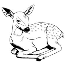 Deer Coloring Pages To Print Wild Life