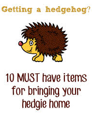 Ceramic Heat Lamp For Hedgehog by Pygmy Hedgehog Pet Must Have Items