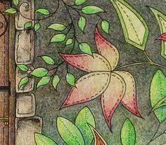 Passion For Pencils My Secret Garden Colouring Book Part 5