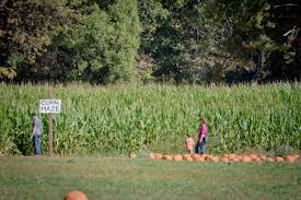 Pumpkin Patch Reno by Apple Hill Apples Pumpkins Train Rides Food Fun Family And