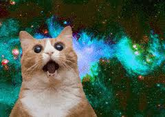 space cats crazy cat surprised cat pizza cat happy birthday cats rich cat the cat in