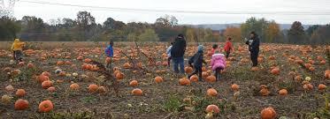 Pumpkin Picking Nj by 15 Farms Near Warren To Visit For Pumpkins Hayrides U0026 More