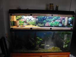 Star Wars Fish Tank Decorations by Best 25 Turtle Tanks Ideas On Pinterest Tortoise Habitat