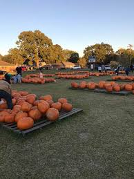 Pumpkin Patch Lafayette Al by Covenant United Methodist Church Home Of The Pumpkin Patch Home