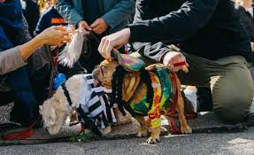 Little Five Points Halloween Parade by These Dogs Have Better Halloween Costumes Than You Vice