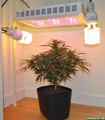 1000 Watt Hps Lamp Height by Testing New Led Lights Vs 1000w Hps Page 11
