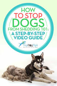 Do All Dogs Shed Their Fur by The 25 Best Dog Shedding Remedies Ideas On Pinterest Dog