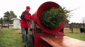 Christmas Tree Baler by Christmas Tree 101 Carrying Tree From Farm To Home Christmas