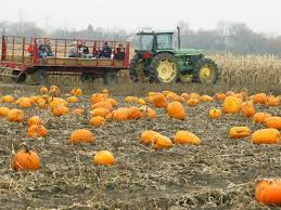 Pumpkin Picking Ct Best by Where To Go For Apple U0026 Pumpkin Picking Southbury Ct Patch