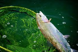 Sink Tip Fly Line Uk by Tackle Reviews Archives Snowbee Blog