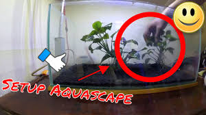 Timelapse Setup Aquascape | Simple Aquascape Nano Tank Anubias ... How To Set Up An African Cichlid Tank Step By Guide Youtube Aquascaping The Art Of The Planted Aquarium 2013 Nano Pt1 Best 25 Ideas On Pinterest Httpwwwrebellcomimagesaquascaping 430 Best Freshwater Aqua Scape Images Aquascape Equipment Setup Ideas Cool Up 17 About Fish Process 4ft Cave Ridgeline Aquascape A Planted Tank Hidden Forest New Directly After Setting When Dreams Come True