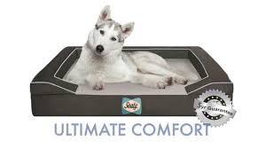 Wayfair Dog Beds by Orthopedic Dog Bed Sealy Youtube