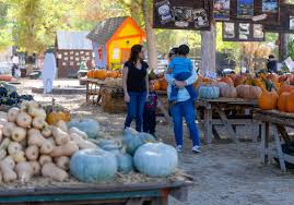 Oak Glen Pumpkin Patch Address by Pumpkins Festivals And Halloween Oh My Fall Has Arrived In