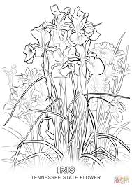 Click The Tennessee State Flower Coloring Pages