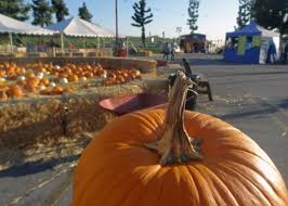 City Of Pomona Pumpkin Patch by Montclair Plaza Features Country Bumpkins Pumpkin Patch U2013 Daily